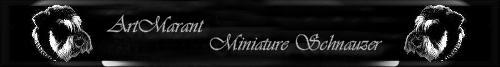 Miniature Schnauzer ArtMarant